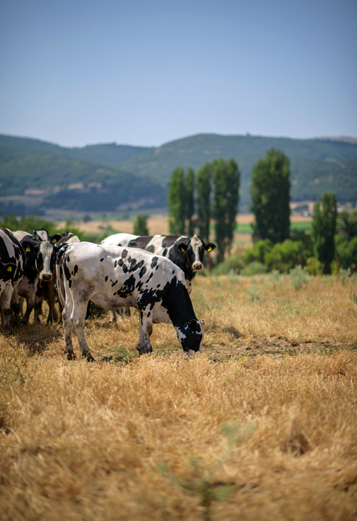 general farmer image